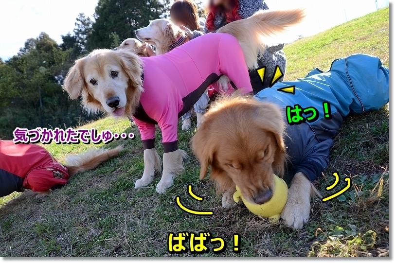 DSC_0925_201512192332198dc.jpg