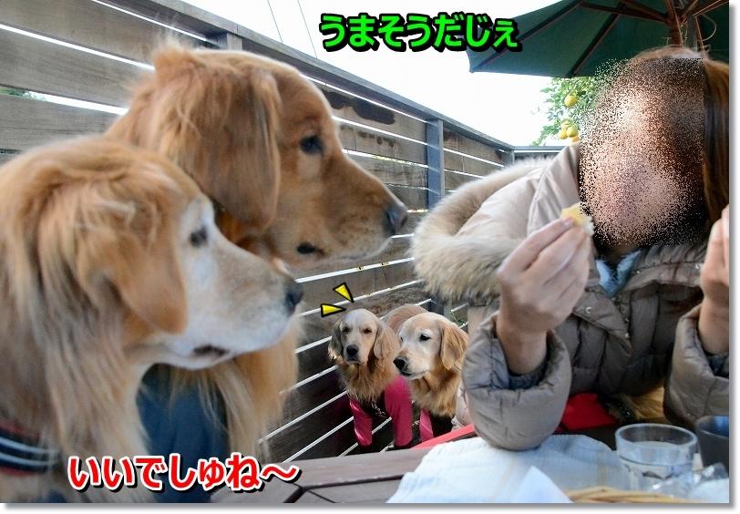 DSC_1095_20151223100810780.jpg