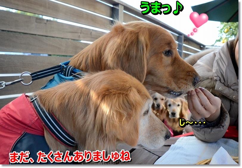 DSC_1101_20151223100814e11.jpg