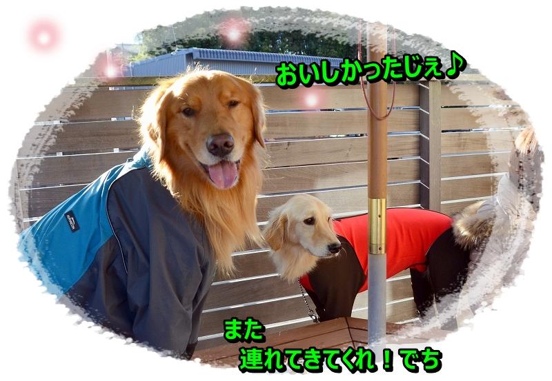 DSC_1145_20151223101126e82.jpg