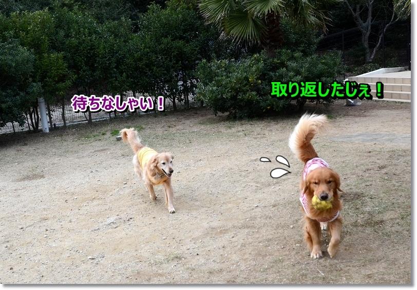 DSC_1188_20151224085423a79.jpg
