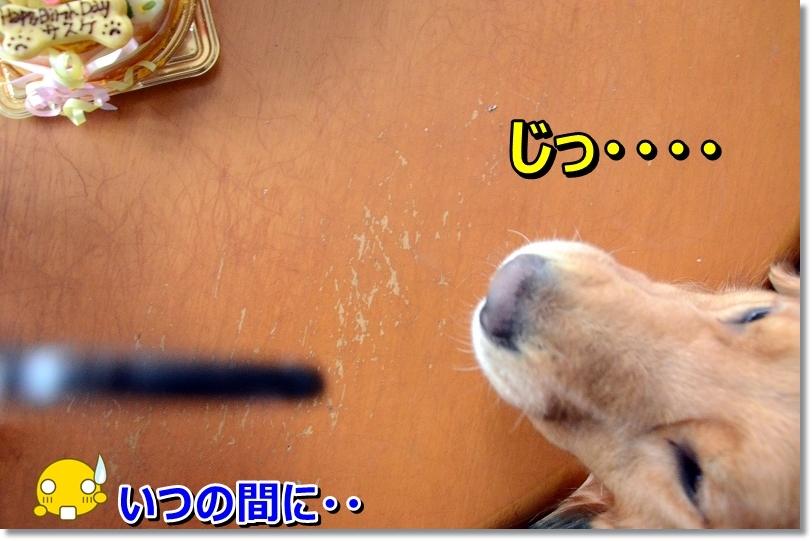 DSC_1314_201512081125387b0.jpg