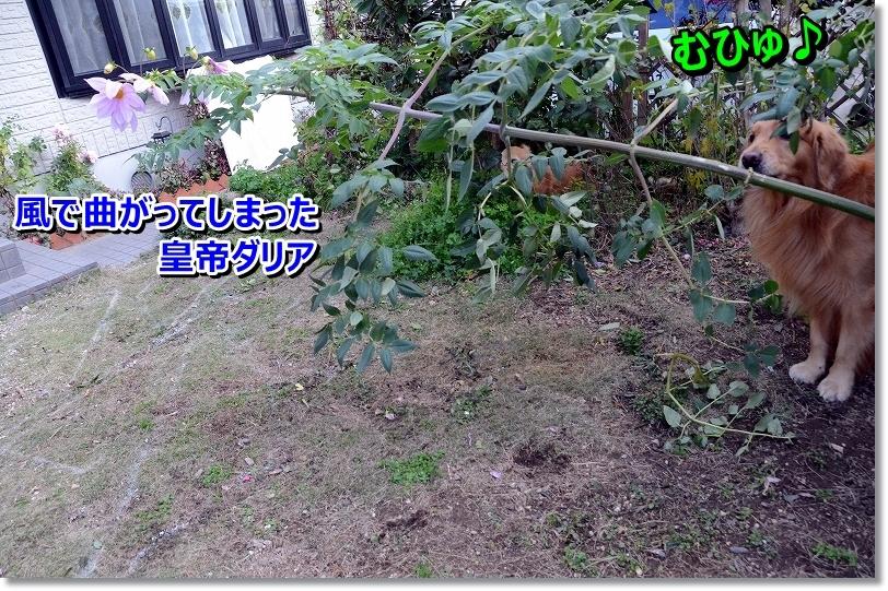 DSC_1336_20151213095618f0c.jpg