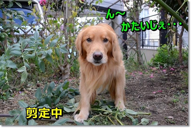 DSC_1364_201512130957598d2.jpg