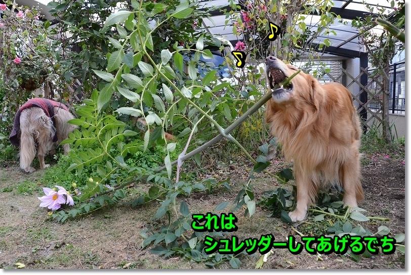 DSC_1381_20151213095803393.jpg
