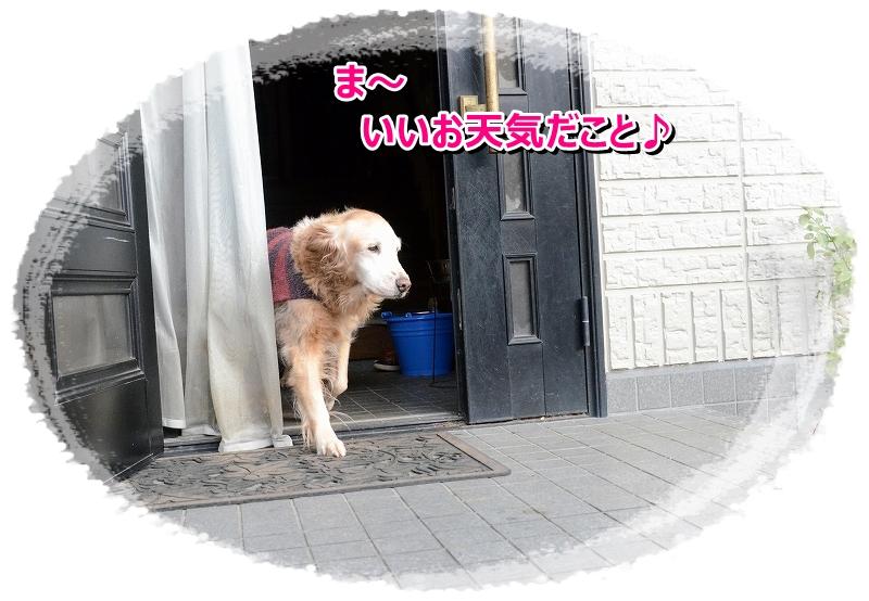 DSC_1417_20151226211634bdb.jpg