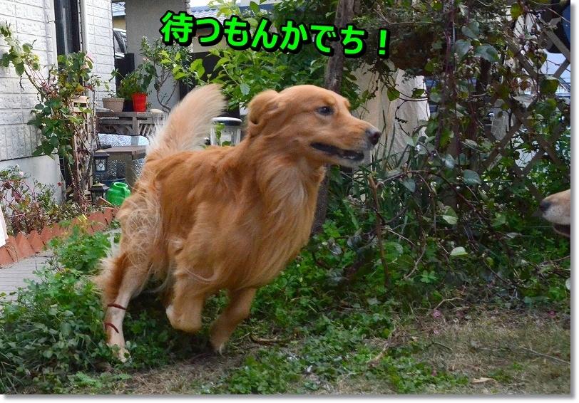 DSC_1422_2015122621163673c.jpg