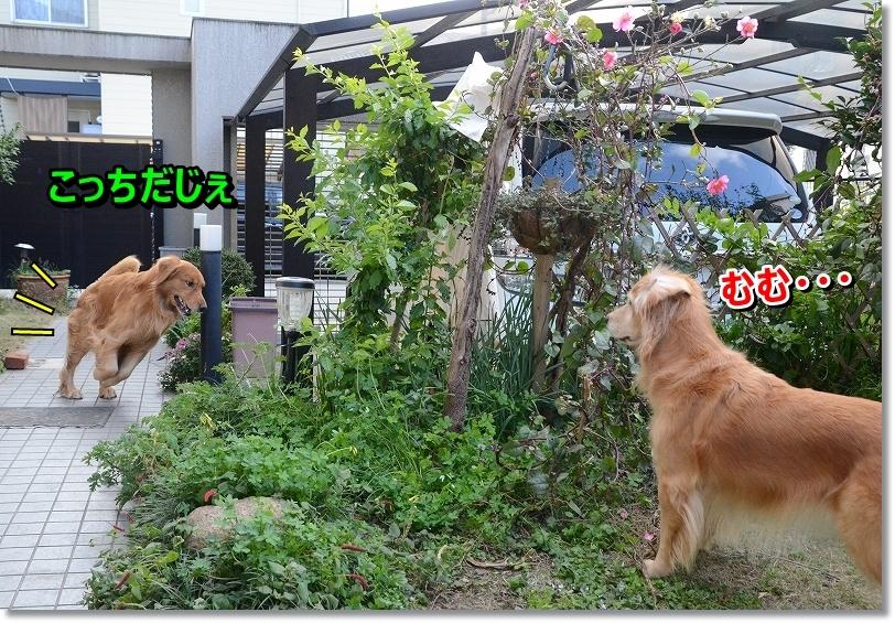 DSC_1428_20151226211639111.jpg