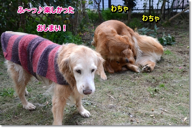 DSC_1477_201512262118431c1.jpg