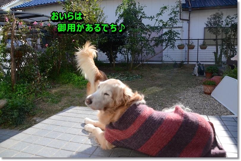 DSC_1499_20160108220320b23.jpg