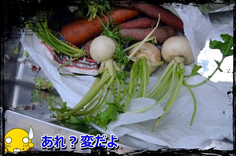 DSC_1508_2016010822035559f.jpg