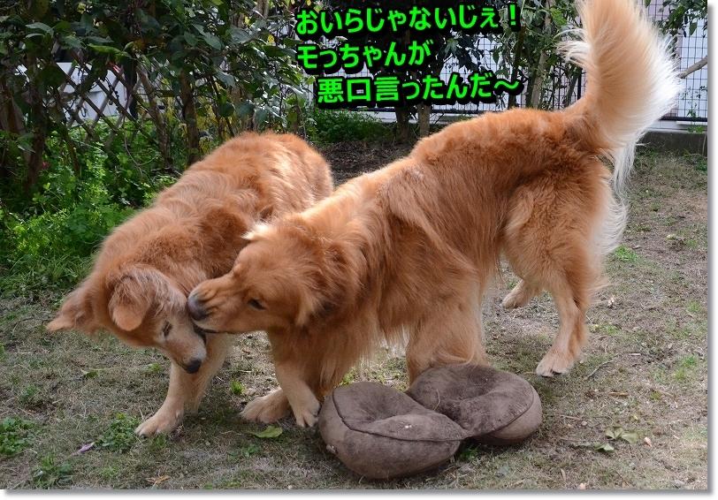 DSC_1566_20160111135950bb8.jpg