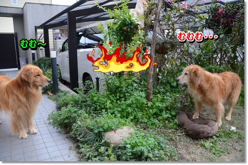 DSC_1597_2016011114012995a.jpg