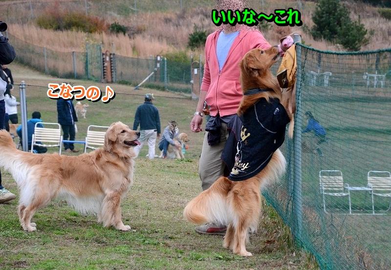 DSC_2162_20151230015541868.jpg