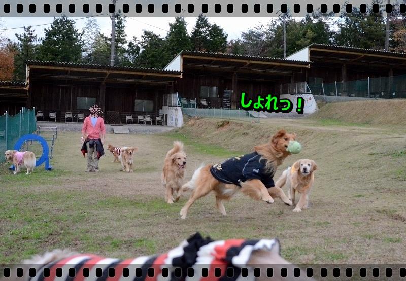 DSC_2192_20151230015704e73.jpg