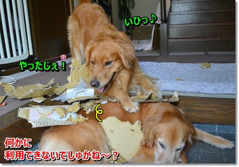 DSC_2544_20151123132349580.jpg