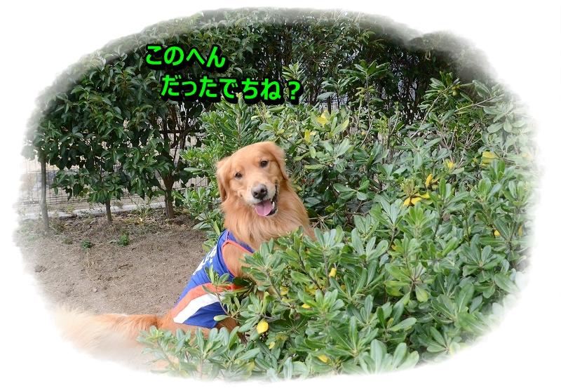 DSC_2611_20160108105054242.jpg