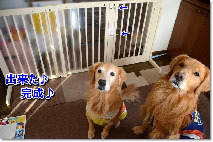 DSC_2685-1.jpg