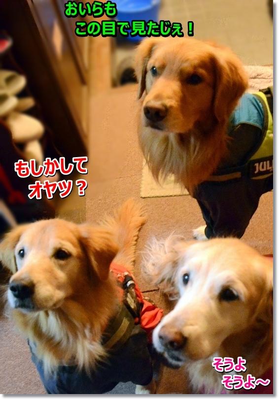 DSC_3527_20160222101920852.jpg