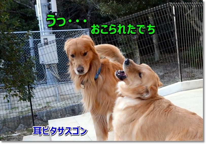 DSC_3776_201602132030419e8.jpg