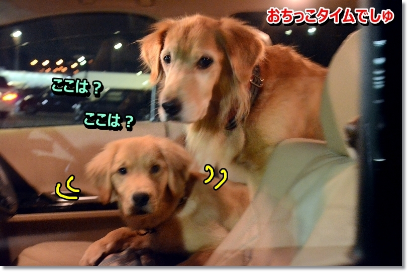 DSC_4096_2016011509353840d.jpg