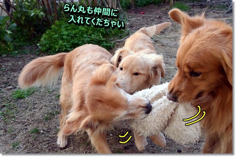 DSC_4197_20160117005146891.jpg