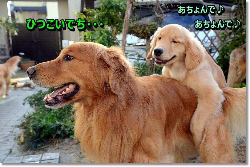 DSC_4209_20160117005152b63.jpg