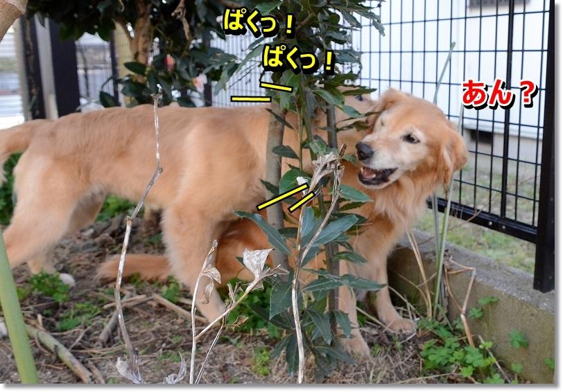DSC_4303_201601180922527e1.jpg