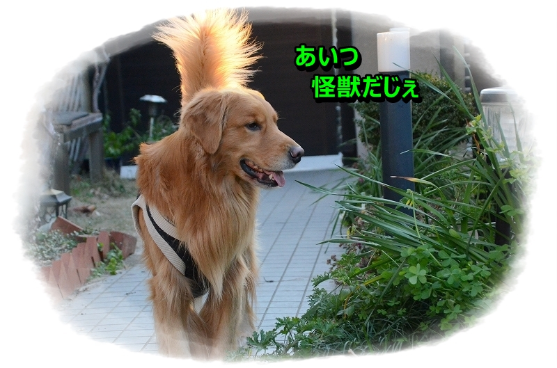 DSC_4711_2016012408032249b.jpg