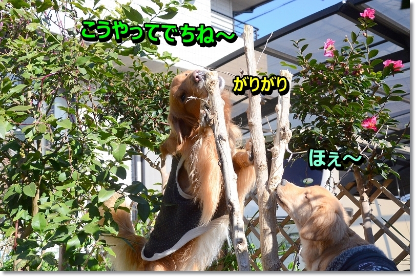 DSC_4979.jpg