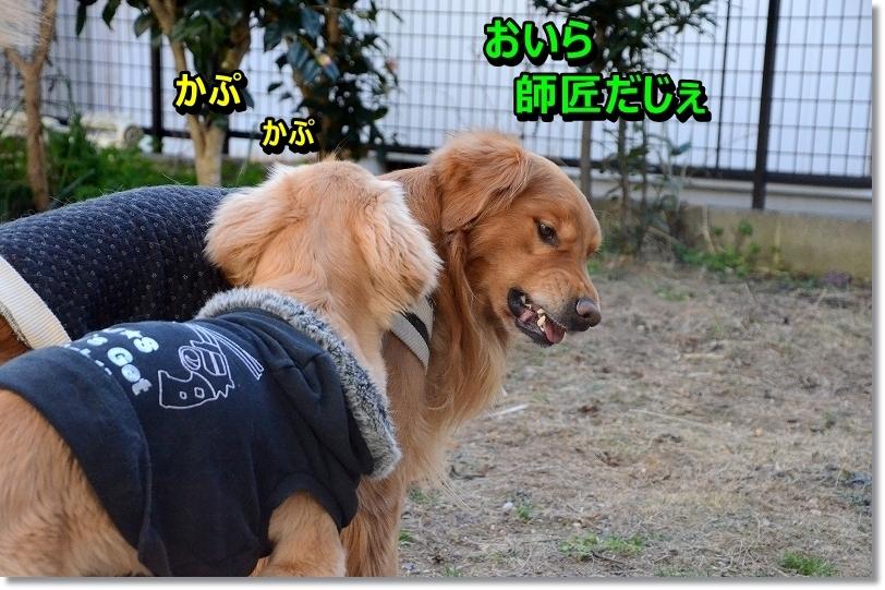 DSC_5026_20160131200844bf6.jpg