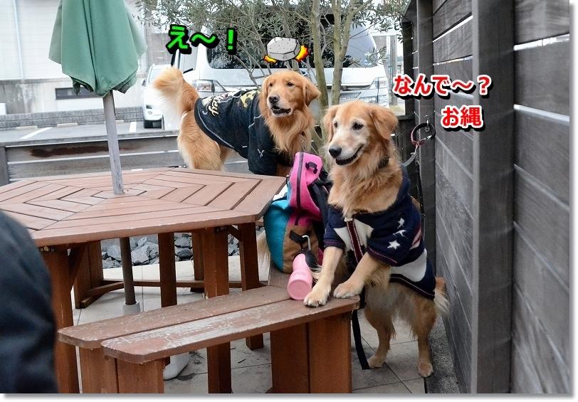 DSC_5399_20160126205755a72.jpg
