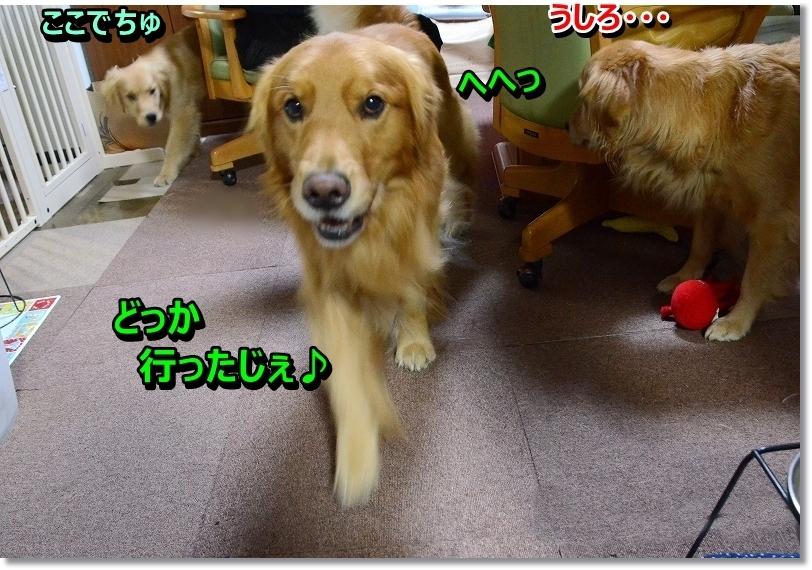 DSC_5613_20160202235404add.jpg