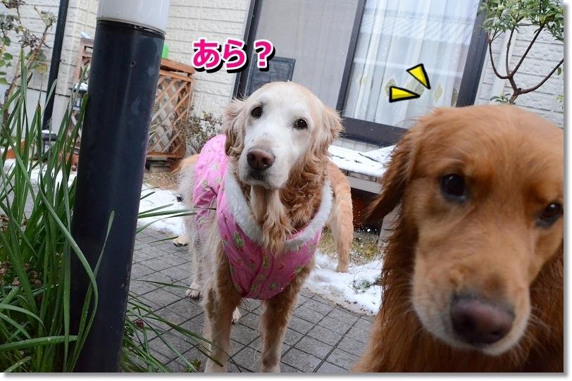 DSC_5862_201601211927074f6.jpg