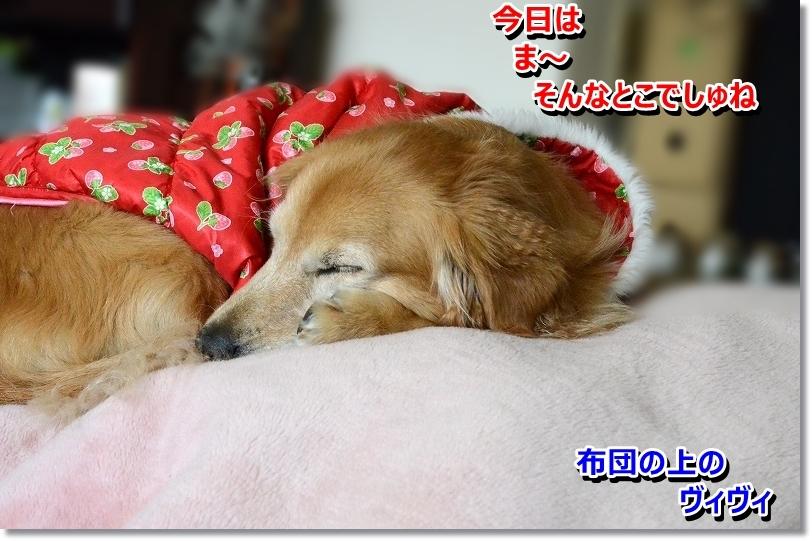 DSC_5980_20160201210736358.jpg