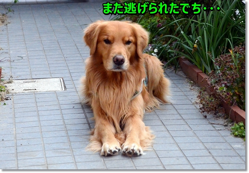 DSC_6036_20160214231736908.jpg