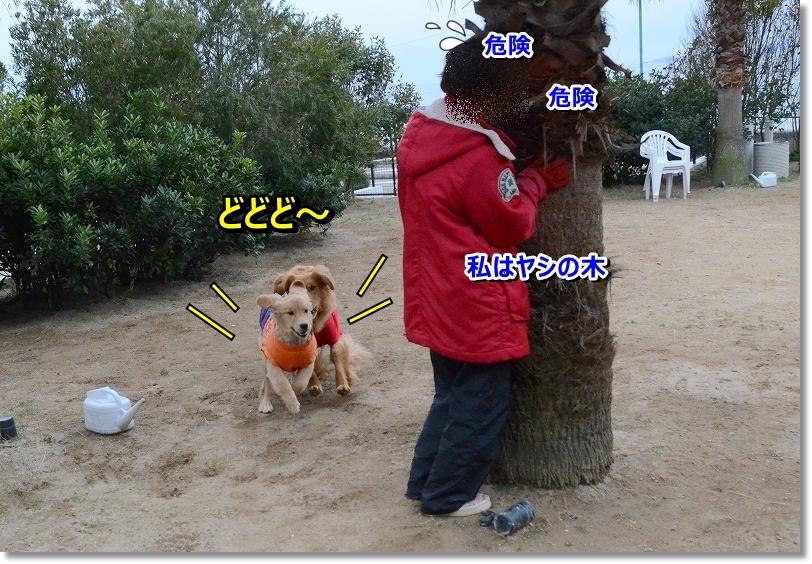 DSC_6260_20160204233038959.jpg