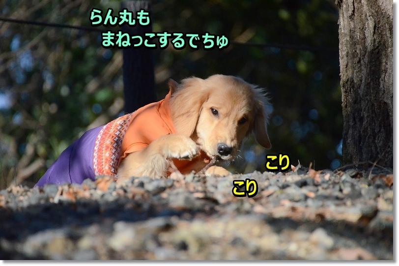 DSC_6525_20160226202710471.jpg