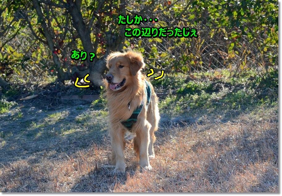 DSC_6600_2016022709090484f.jpg