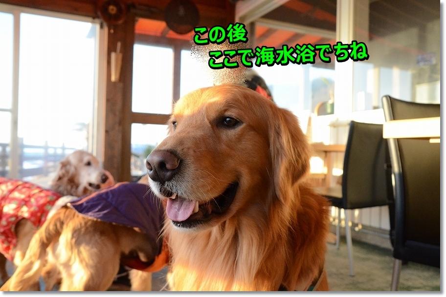 DSC_6625_2016030212182731a.jpg