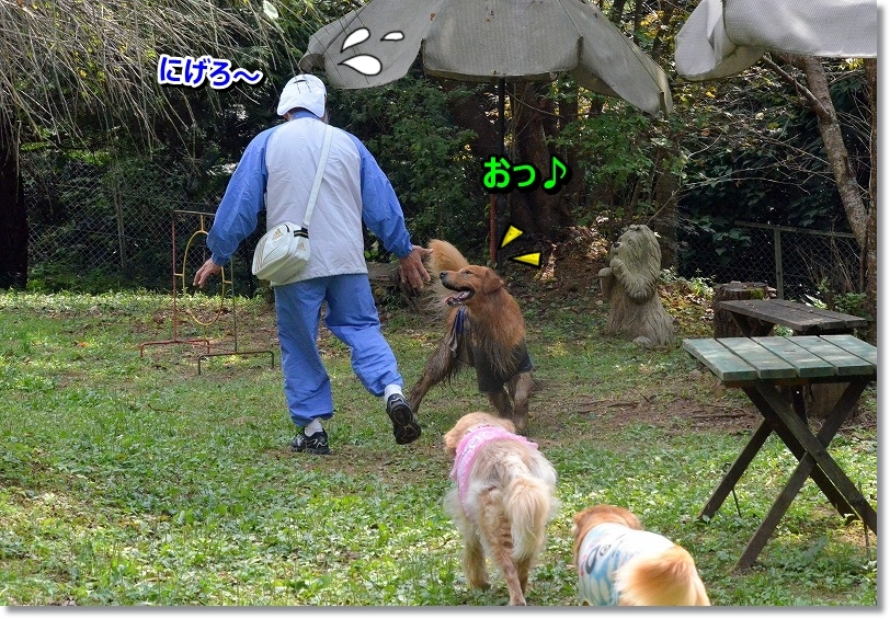 DSC_6684_201511032159432be.jpg
