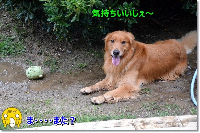 DSC_6811_20151105201807d5f.jpg