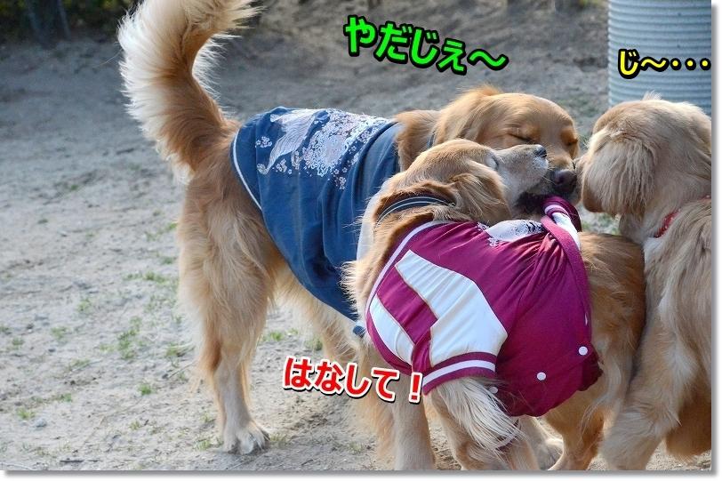 DSC_6967yamenasai.jpg