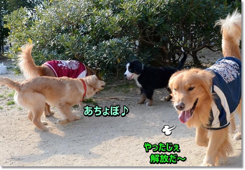 DSC_6979_20160218120618aac.jpg