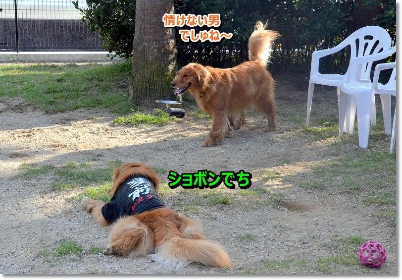 DSC_7146_20151104211243b6c.jpg