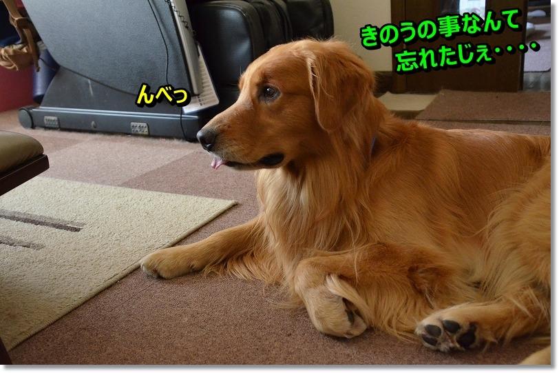 DSC_7202_20151114193744965.jpg