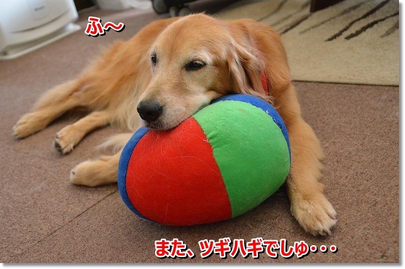 DSC_7211_20151114193803915.jpg