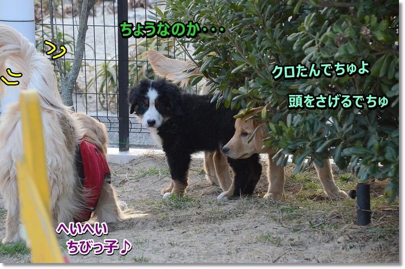 DSC_7240_20160220224618fa9.jpg