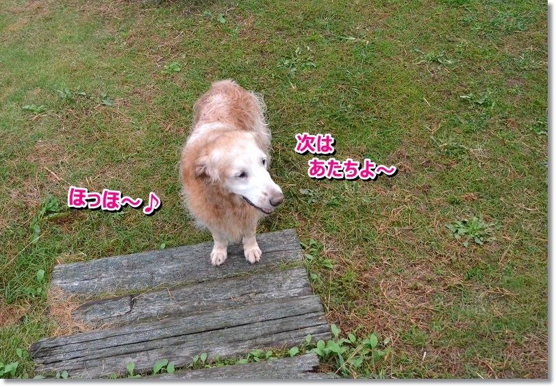 DSC_7826_201510251345360f6.jpg
