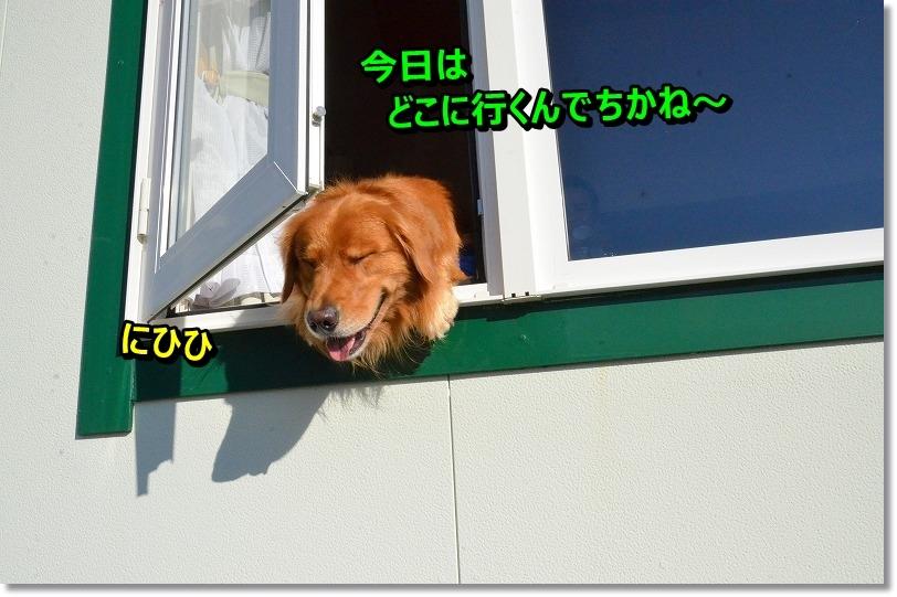 DSC_7965_20151027215527c22.jpg